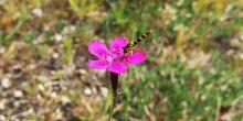 Gründachvegetation als Nahrungshabitat für Insekten (© Roland Schröder)